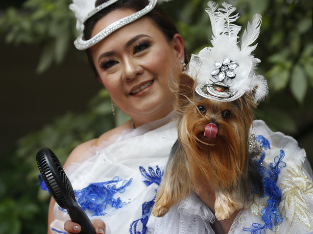 "Gina Evangelista uses a portable fan to cool her Yorkshire Terrier pet named ""Georgine"" prior to having its paws cast in a molding clay at a shopping mall's Hollywood version of its ""Walk of Fame"", in a prelude to Sunday's blessing of animals in celebration of the feast day of St. Francis of Assisi Wednesday, October 3, 2018, Manila, Philippines. Pets are traditionally blessed every first Sunday of October to celebrate the feast day of Saint Francis of Assisi, considered the patron saint of animals and environment by the Catholic Church. (Photo by Bullit Marquez/AP Photo)"
