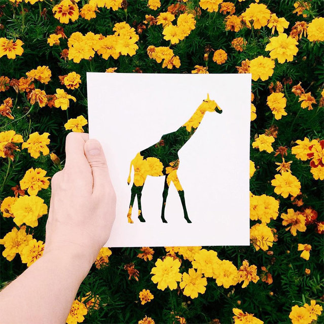 Animal Paper Silhouettes By Nikolai Tolstyh