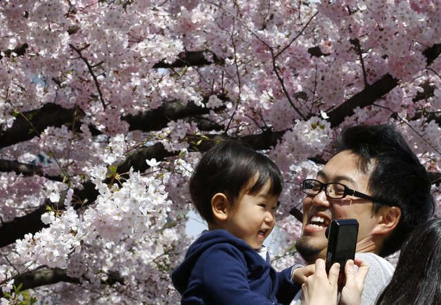 A family takes a photo in front of the blooming cherry blossoms near the Chidorigafuchi Imperial Palace moat in Tokyo, Sunday, March 29, 2015. (Photo by Shizuo Kambayashi/AP Photo)