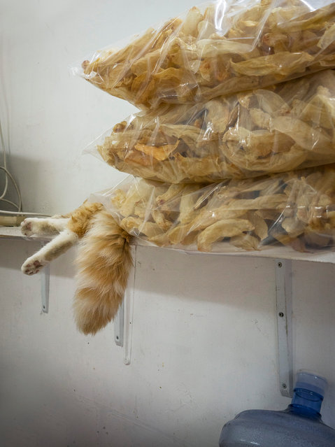 Hong Kong Shop Cats #63. Sleeping on the job … cats don't seem to be banned from shops in Hong Kong, unlike in other places. (Photo by Marcel Heijnen/Blue Lotus)
