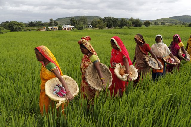 Laborers engaged under a government program that guarantees 100 days of employment a year in rural, return home through a field, in Mubarakpur village, Chandauli district, in Uttar Pradesh state, India, Thursday, September 30, 2021. (Photo by Rajesh Kumar Singh/AP Photo)