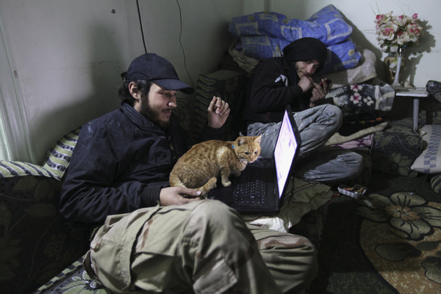 """A """"Free Syrian Army"""" fighter holds a cat as he looks at his computer in Deir al-Zor, eastern Syria December 6, 2013. (Photo by Khalil Ashawi/Reuters)"""