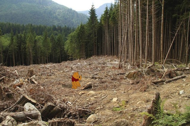 Poor Pooh gets a taste of deforestation. (Photo by Jeff Hong)