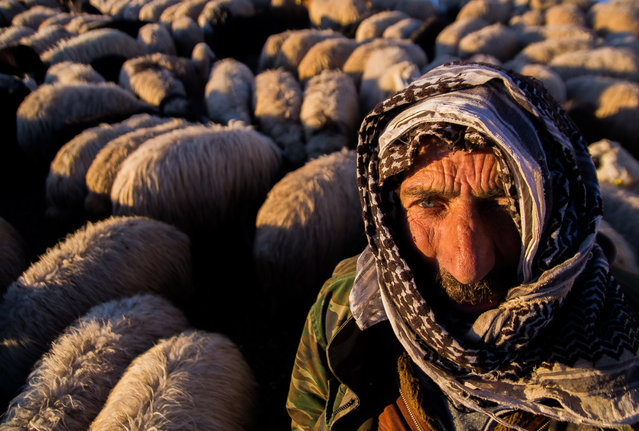 """""""Shepherd"""". Him life is not easy like us... he had eight children. the children are waiting meal... waiting help for school outlay. You can see in the sharp eyes, how is hard life for they... Photo location: Elazig, Turkey. (Photo and caption by Mustafa Tarik Canbay/National Geographic Photo Contest)"""
