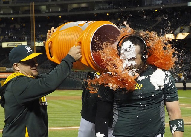 Oakland Athletics Derek Norris (R) gets doused with Gatorade by teammates Stephen Voght (L) and Nate Freiman (back, obscured) after hitting the game winning hit against the Tampa Bay Rays during the 10th inning of their MLB game at O.co Coliseum in Oakland, California, USA, 04 August 2014. The Athletics defeated the Rays 3-2 in 10 innings. (Photo by John G. Mabanglo/EPA)