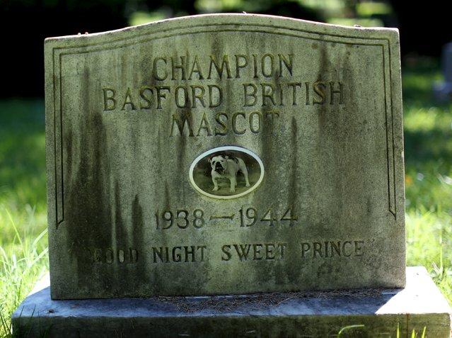 A dog's headstone is seen at the Aspin Hill Memorial Park in Aspen Hill, Maryland, July 22, 2015. (Photo by Gary Cameron/Reuters)