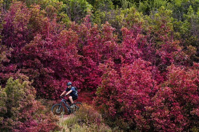 Rich Compton rides his mountain bike through an area covered in red fire retardant as crews battle the Chatridge 2 fire nearby on June 29, 2020 in Littleton, Colorado. The wildfire forced the evacuation of a nearby subdivision but firefighters were able to contain the 461-acre blaze with no structure loss or injuries. (Photo by Michael Ciaglo/Getty Images)
