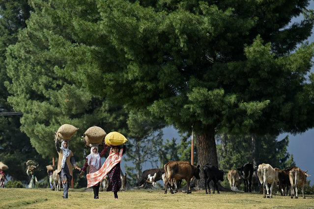 Bakarwal nomadic women carry firewood in Doodhpatri, Budgam district of Jammu and Kashmir on July 27, 2020. (Photo by Tauseef Mustafa/AFP Photo)