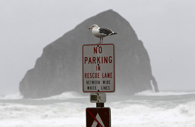 A seagull sits on sign near rough surf during intense weather in Pacific City, Oregon December 10, 2014. High winds and heavy rain are expected through Thursday. (Photo by Steve Dipaola/Reuters)