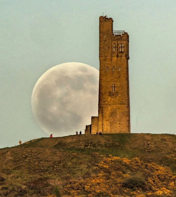 The Flower Moon is seen 99% full as it rises behind Victoria Tower on Castle Hill on May 06, 2020 in Huddersfield, England. The Flower Moon is this year's last Supermoon. (Photo by Anthony Devlin/Getty Images)