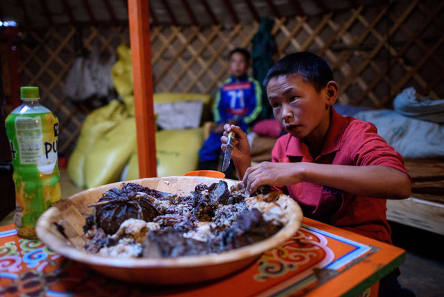 This picture taken on July 10, 2015 shows 13-year-old jockey Purevsurengiin Togtokhsuren having his breakfast early morning before a race in Khui Doloon Khudag, some 50 kms west of Ulan Bator. (Photo by Johannes Eisele/AFP Photo)