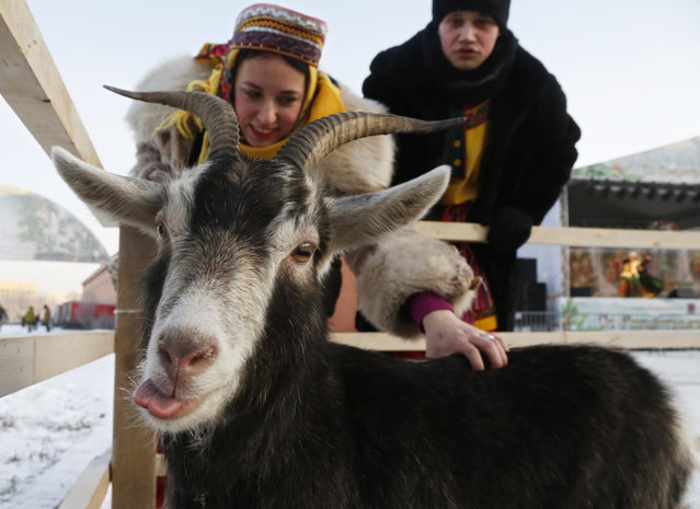 A woman dressed in traditional Russian clothes strokes a goat during the celebration of Orthodox Christmas in St.Petersburg, Russia, Thursday, January 7, 2016. (Photo by Dmitry Lovetsky/AP Photo)