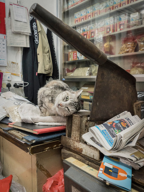 """Hong Kong Shop Cats #35. Heijnen has a fondness for market, alley and shop cats – posting pictures on Instagram under the handle Chinese Whiskers – but has admitted he's not averse to shooting the occasional """"garage dog"""". (Photo by Marcel Heijnen/Blue Lotus)"""