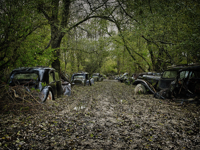 Dozens of cars line a pathway in a forest, in 2013, in France. (Photo by Dieter Klein/Barcroft Media)