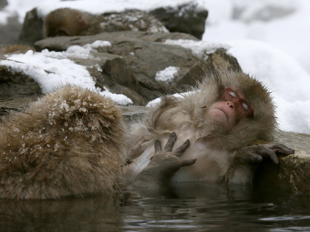 Japanese Macaque monkeys soak in the warmth of mountain hotsprings at Jigokudani Monkey Park, in Yamanouchi, central Japan, 19 January 2014. The Japanese Macaques (Macaca fuscata), also referred to as Snow Monkeys, live freely in this area that is covered by snow one third of the year. (Photo by Kimimasa Mayama/EPA)