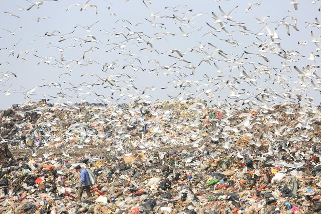 Seagulls fly over a garbage dump site in Dalian, Liaoning province, February 28, 2016. (Photo by Reuters/Stringer)