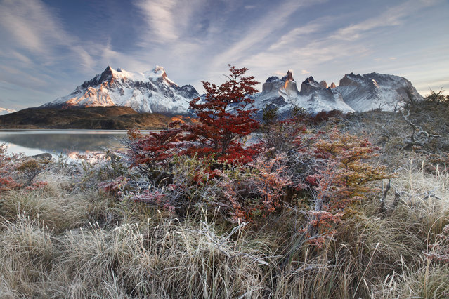 """First place, Breathing Spaces. """"The sun had already risen and the dawn had been incredible. Wandering through the vegetation in Torres del Paine National Park in Chile, however, I realised that the essence of the territory was only revealing itself in that moment. The extraordinary colours of the sunrise had dissolved, leaving behind a unique intimate feeling amongst one of the most beautiful mountain ranges on Earth"""". (Photo by Andrea Pozzi/The Guardian)"""