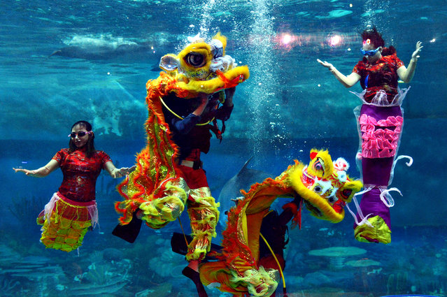 Indonesian performers dressed as mermaids wearing traditional Chinese cheongsam dress and a lion perform underwater in a special program celebrating the Lunar New Year at Jakarta's Ancol park on January 31, 2014. (Photo by Romeo Gacad/AFP Photo)