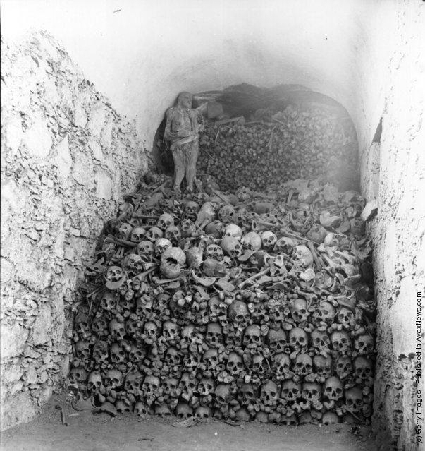 Bones, Skulls, Mummies