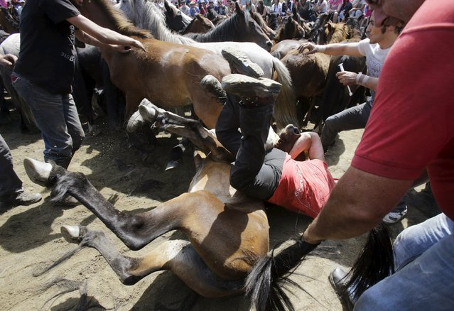 """Revellers try to hold on to a wild horse during the """"Rapa das Bestas"""" traditional event in the village of Sabucedo, northwestern Spain July 5, 2015. (Photo by Miguel Vidal/Reuters)"""