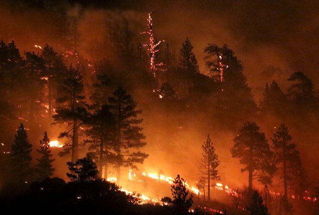 Los Angeles county firefighters battle wild land fire call the Pine Fire in Wrightwood, California July 17, 2015.  A late night brush fire broke out near the Mountain High ski resort Friday in the hills of the Angeles Forest. The fire has burn over 125 acres as of 1:30am Saturday with no containment. (Photo by Gene Blevins/Reuters)