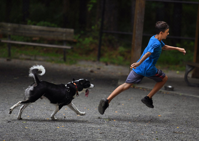 Nilson Molina (age 12 of Silver Spring) gives his pooch Rocky a good work out as Rocky chases the dog treat that Nilson is holding. After a few round trips in the park they both used the water hose provided by the park. -The Wheaton Dog Park is popular even on very warm days because it has lots of shade and a water hose and several community dog bowls. (Photo by Michael S. Williamson/The Washington Post)