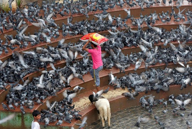 A man carries a bag containing pigeon feed as he walks amidst a flock of pigeons at a promenade in Mumbai, India, July 19, 2016. (Photo by Shailesh Andrade/Reuters)
