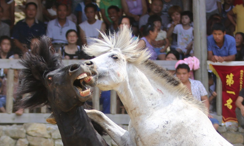 Xinhe Festival