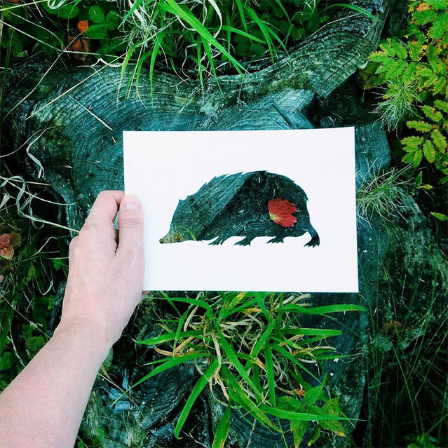 Nature Animal Paper Silhouettes By Nikolai Tolstyh