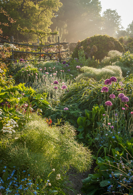 Winner, Beautiful Gardens category. Great Dixter house and gardens, East Sussex, England. (Photo by Nicky Flintt/The Guardian)