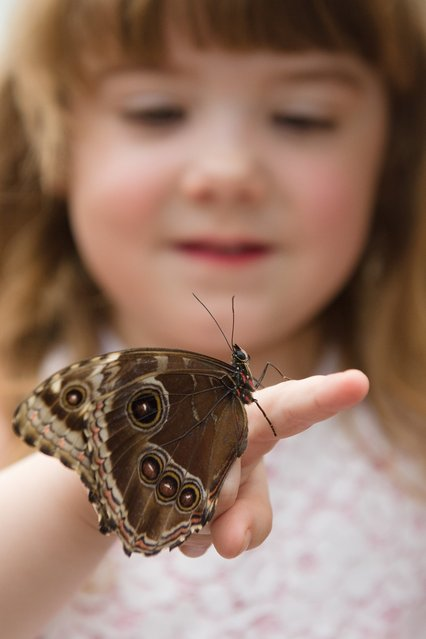 """A girl poses with a butterfly during a photocall to promote the """"Sensational Butterflies"""" exhibition at the Natural History Museum in central London, on March 25, 2013.  With around 400 live tropical butterflies and moths living in the temporary facility, visitors will get the chance to see them flying freely as well as looking for emerging butterflies at the hatchery window.  Running from March 29 to September 15, 2013, the exhibition is housed in a structure in the museum grounds. (Photo by Leon Neal/AFP Photo)"""