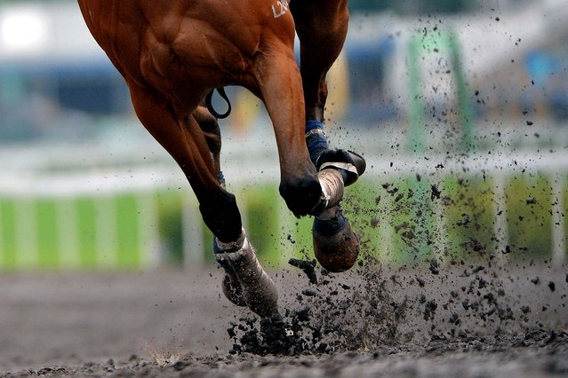 Horses dig up the dirt on the all weather track during a workout for Sunday's Champions Mile at Sha Tin race course  in Hong Kong, on May 3, 2013. (Photo by Vince Caligiuri/Getty Images)