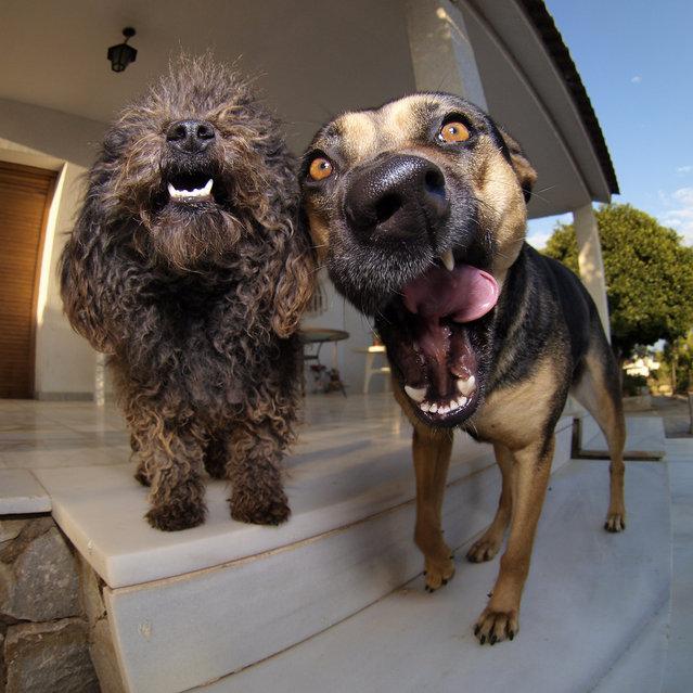 """""""Los perros de Longeville"""". (Photo by Señor Miquel)"""