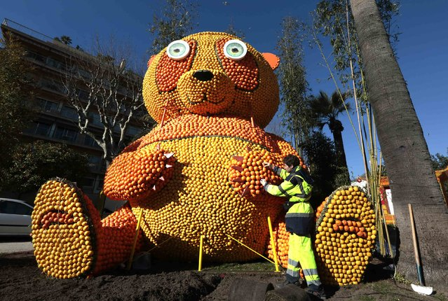 A worker puts the final touches to a replica of a giant panda made with lemons and oranges during the 82th Lemon festival in Menton February 12, 2015. (Photo by Eric Gaillard/Reuters)