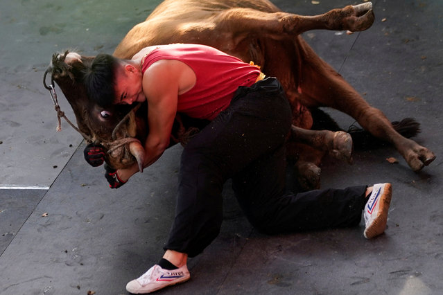 Zhong Xiaojie, 19, wrestles a bull to the ground during a bullfight in Jiaxing, Zhejiang province, China on October 27, 2018. (Photo by Aly Song/Reuters)