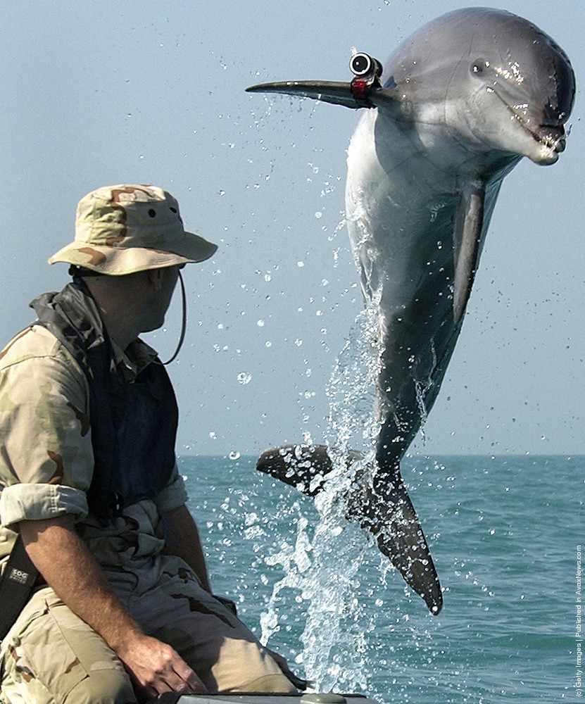 Dolphins In The Military