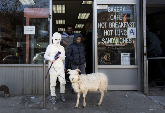 A boy, in costume as a mummy for the Jewish celebration of Purim, leads his pet goat out of a Brooklyn bakery, Sunday, March 12, 2017 in New York. Purim celebrates the Jews' salvation from genocide in ancient Persia, as recounted in the Scroll of Esther. (Photo by Mark Lennihan/AP Photo)