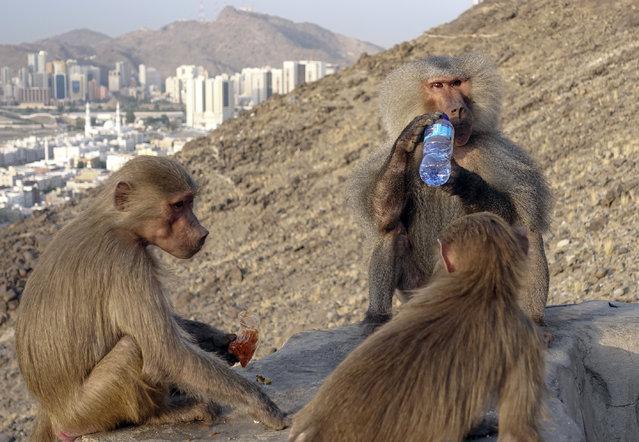 Monkeys are seen as Muslim Hajj pilgrims climb the Jabal al-Nour (al-Noor mountain) to visit Hira Cave during the annual Hajj pilgrimage in Mecca, Saudi Arabia on August 1, 2019. (Photo by Halil Sagirkaya/Anadolu Agency via Getty Images)