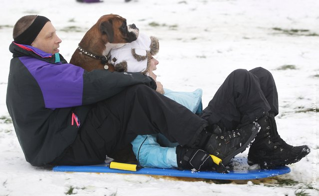 A man sledges on Primrose Hill with his daughter and their dog