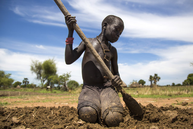 Nyibol Lual, 13 years old, helps her family to prepare the land for cultivation on May 31, 2017, in Panthau, Northern Bahr al Ghazal, South Sudan. The family has a small land where they cultivate sorghum. An estimated 63 per cent of the population in Northern Bahr al Ghazal is experiencing severe food insecurity, according to the latest Integrated Food Security Phase Classification (IPC) report. The situation is particularly bad in Aweil West and Aweil South counties, where the exhaustion of household food stocks and growing dependence on financially inaccessible markets have left the population facing Emergency levels of food insecurity. (Photo by Albert Gonzalez Farran/AFP Photo)