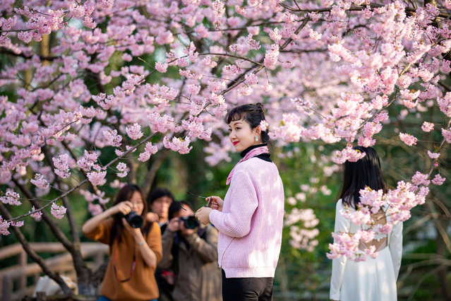 Visitors pose for pictures under blooming cherry blossoms at a botanical garden in Nanjing, China on March 15, 2019. (Photo by Reuters/China Stringer Network)