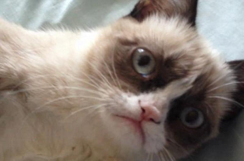 Grumpy Cat: Photos + Video