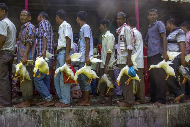 Indian Hindu devotees line up with ducks to be sacrificed at the 280 years old historic Devi Dol (temple), built by Queen Madambika, consort of great Ahom King Siva Singha in the year 1734, on the occasion of Maha Asthami during Durga Puja festival in Sivasagar, in eastern Assam state on October 2, 2014. (Photo by Luit Chaliha/AFP Photo)