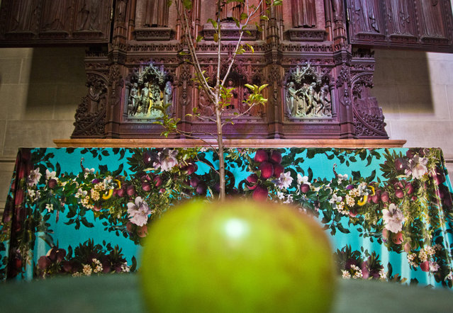 """Temptation"", part of an installation from the artist-duo David Burns and Austin Young, appears among the works of 30 artists in the multimedia exhibition ""The Value of Food: Sustaining a Green Planet"" at the Cathedral of St. John the Divine, Wednesday, October 7, 2015, in New York.  (Photo by Bebeto Matthews/AP Photo)"
