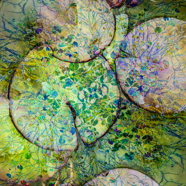 """Winner, Abstract Views category. Northumberland, England, UK. """"I overlaid multiple images of lily pads at different scales to emphasise their beauty and intricacy"""". (Photo by Cathryn Baldock/The Guardian)"""