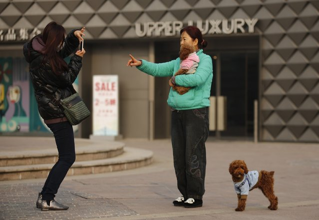 A woman takes a picture with her pet dog at a shopping mall in Beijing, November 25, 2014. (Photo by Kim Kyung-Hoon/Reuters)