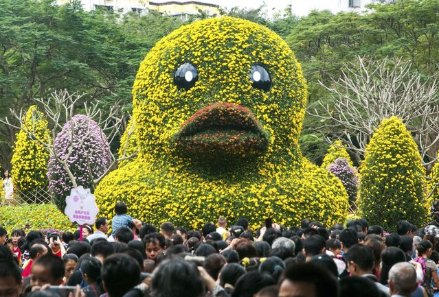 A floral replica of the inflated Rubber Duck by Dutch conceptual artist Florentijn Hofman is seeb on display at a chrysanthemum exhibition in Shenzhen, November 29, 2014. (Photo by Reuters/Stringer)