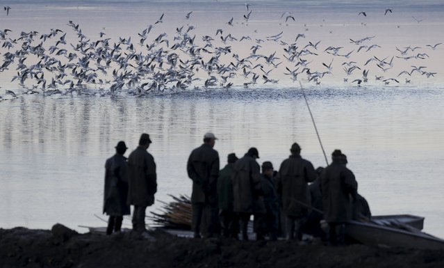 Seagulls take off above fishermen during the traditional carp haul in the village of Smrzov, near the south Bohemian town of Trebon, Czech Republic, November 2, 2015. (Photo by David W. Cerny/Reuters)