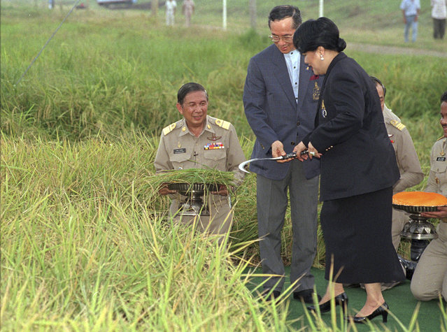 In this May 14, 1996, file photo, Thailand's King Bhumibol Adulyadej and Queen Sirikit hold a sickle during a rice harvesting ceremony in Ayuthaya, 70 km (44 mi) north of Bangkok. (Photo by Charles Dharapak/AP Photo)