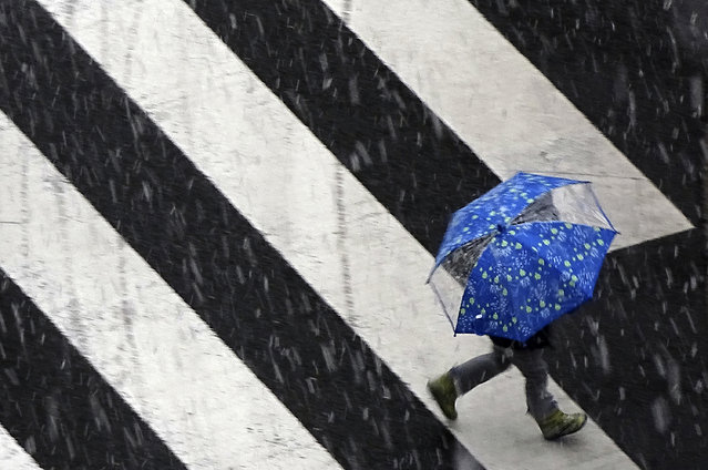 A child walks under snow falling at a pedestrian crossing in Tokyo Friday, February 2, 2018. Metropolitan areas braced for snowfall Thursday and Friday with the Japan Meteorological Agency's warning of traffic system disruptions. (Photo by Eugene Hoshiko/AP Photo)